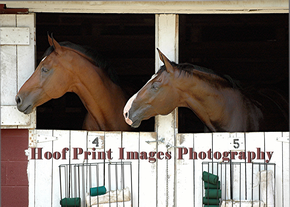 Hoof Print Images Photography