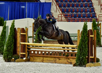 Junior Hunter 3'6 (8-23-16)