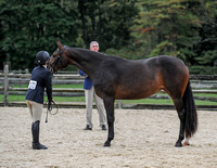 PA Bred Two Year Old Horse 910-14-17)