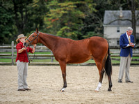 Yearling Horse Colt Jackpot (10-14-17)