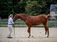 Yearling Horse Filly Jackpot (10-14-17)