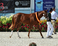 Class 112 Young Horse Championship