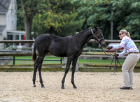 PA Bred Weanling & Weanling Colt Jackpot (10-14-17)